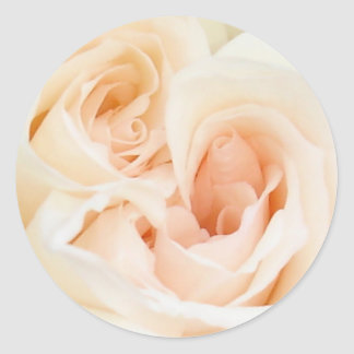 White Rose: Innocent and Pure Love Classic Round Sticker