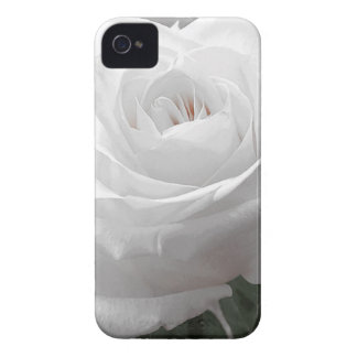 White Rose iPhone 4 Cover