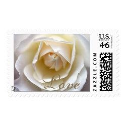 White Rose – Love Stamp