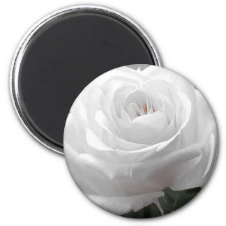 White Rose Magnet