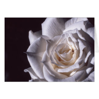 White Rose Masterpiece Card