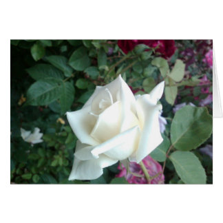 White Rose Means Peace Card