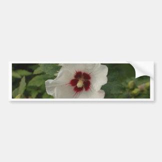 White-Rose of Sharon (Flower) Bumper Sticker
