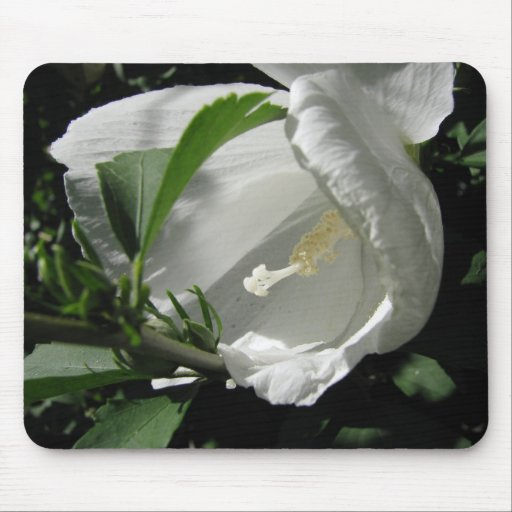 White Rose of Sharon Mouse Pad