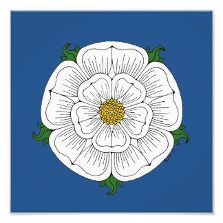 White Rose of York Print Photograph