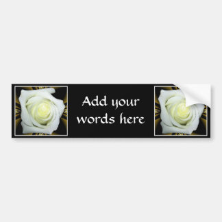 White Rose on Black and Gold Background Car Bumper Sticker