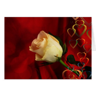 White rose on red background card