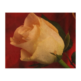 White rose on red background cork paper prints
