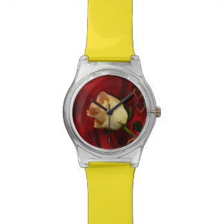 White rose on red background watch