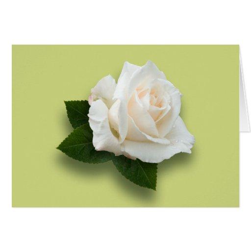 White Rose 'Pascali' Card