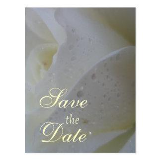 White Rose Petal Wedding Postcard