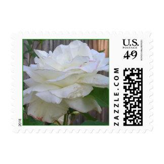 White Rose Stamp