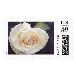 White rose postage stamp.