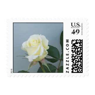 White Rose Postage Stamp