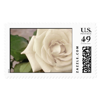 White Rose Postage Stamps