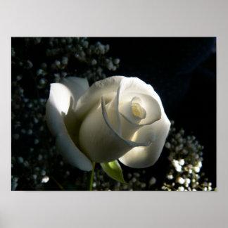 White Rose Print