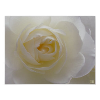 White Rose Poster Print Beautiful Flower Art Print