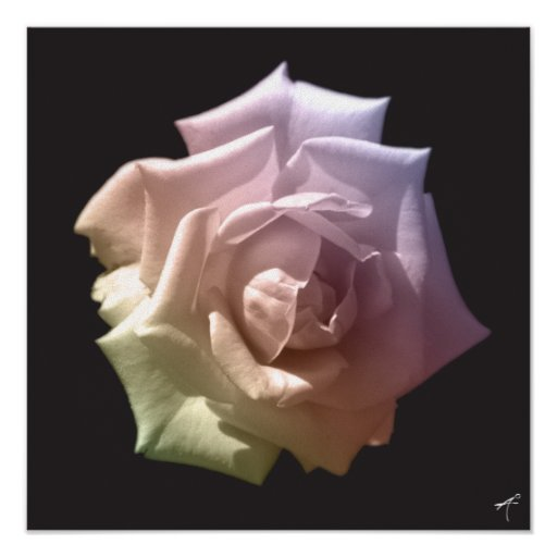 White Rose Silhouette Posters