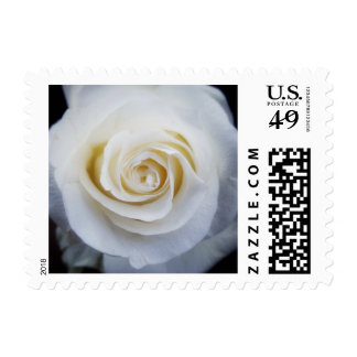 White Rose Stamp