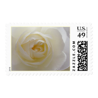 White Rose Stamps Beautiful White Flower Postage