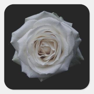 White rose square sticker