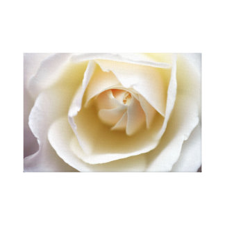 White Rose - Stretched Canvas Print