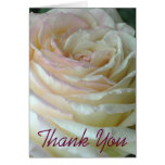 White Rose Thank You Note Cards