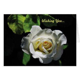 White Rose Valentine Greeting Cards