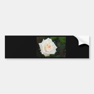 White Rose With Natural Garden Background Bumper Stickers