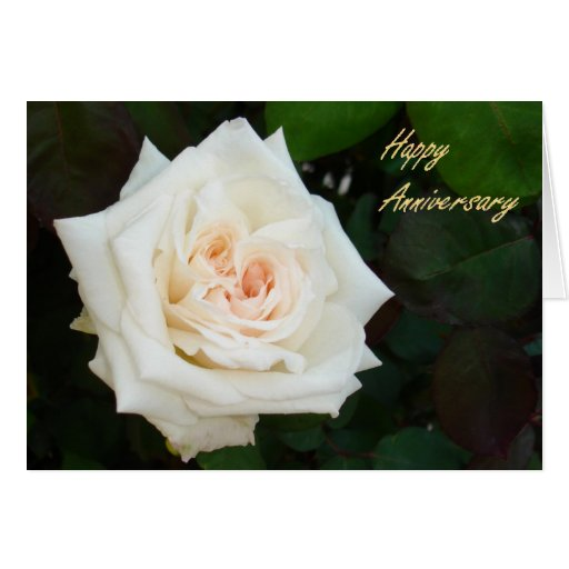 White Rose With Natural Garden Background Cards