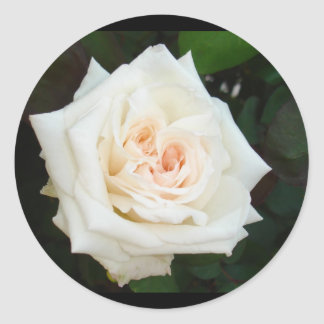 White Rose With Natural Garden Background Classic Round Sticker