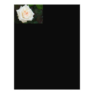 White Rose With Natural Garden Background Flyer