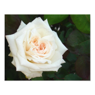 White Rose With Natural Garden Background Invites