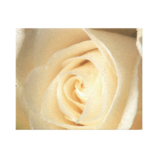 White Rose Wrapped Canvas