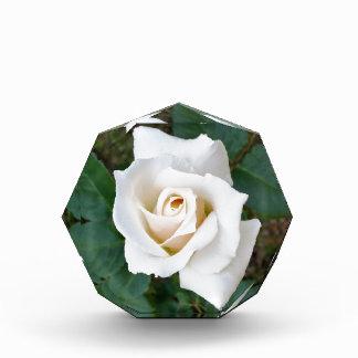 white rosebud acrylic award