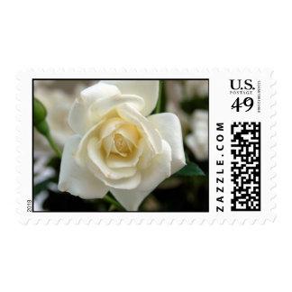 White Rosebud Postage