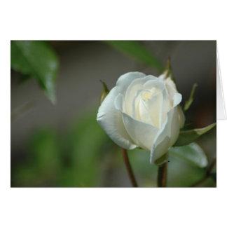 White Rosebud Stationery Note Card