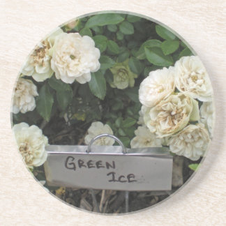 White Roses Green Ice Sandstone Coaster