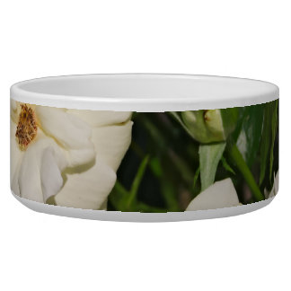 White Roses in Bloom - Flower photography Bowl