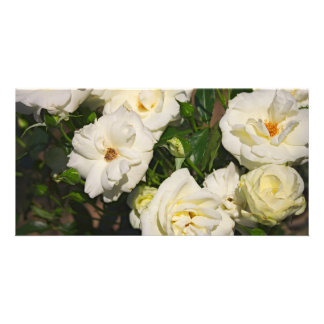 White Roses in Bloom - Flower photography Card