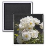 White Roses Magnet 2