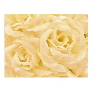 White roses photo postcard
