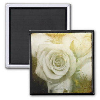 White Roses Squared 2 Inch Square Magnet