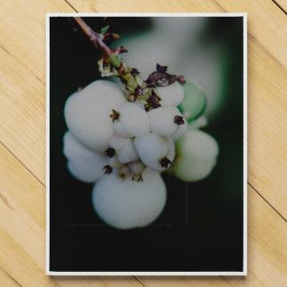 White round plant fruits macro chocolate countdown calendars