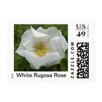 White Rugosa Rose Photo Postage Stamp
