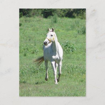 Fichas feas y mal hechas de Virus White_running_horse_postcard-p239513745269305495trdg_400