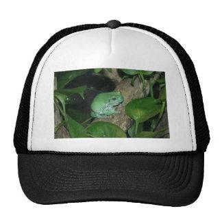 White s Tree Frog Dumpy Frog Mesh Hat
