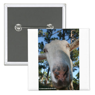 White saanen dairy goat doe nose close up HI Buttons
