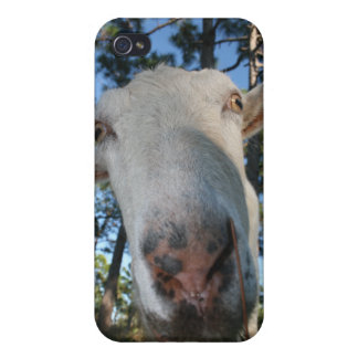 White saanen dairy goat doe nose close up HI iPhone 4/4S Covers