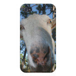 White saanen dairy goat doe nose close up HI Case For iPhone 4